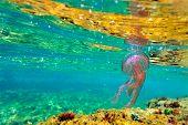 underwater image of jellyfish