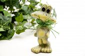 Frog with green plant