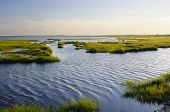 picture of marsh grass  - Bay side of island with marsh grass in late afternoon sun - JPG