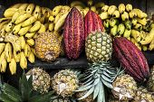 picture of guayaquil  - cocoa fruit on the counter of the Indian Latin America Fruit street market Ecuador - JPG