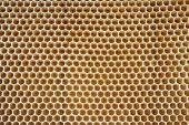 Textura de mel
