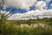 image of goldenrod  - Beautiful fall day with blooming Goldenrod and a beautiful blue sky with cumulus clouds - JPG