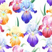 White seamless pattern with Iris flowers
