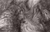 Macro Wool Gray Wolf