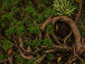 Tree roots over green grass background