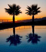 Palm Tree Silhouettes In An Aegean Sunrise