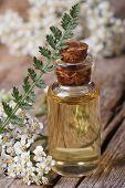 Yarrow Oil In A Bottle With Flowers Vertical Macro