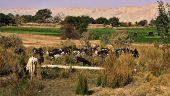 Western Desert Oasis Of Kharga, Egypt