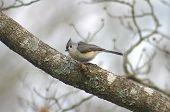 birds 013