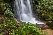 A Waterfall in a Green Valley with Camellia Flowers.