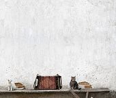 picture of accordion  - accordion and two cats sitting on the bench near the wall - JPG