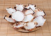 Wooden Plate With Shell Scallops