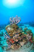 Coral Pinnacle With Sunburst