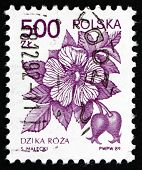 Postage Stamp Poland 1989 Wild Rose