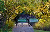 Footbridge Surrounded By Autumn Color