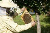 Beekeeper Inspected Hive