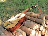Guitar Resting On The Wood In The Forest