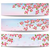 Set Of Beautiful Banners With Pink Sakura Cherry Tree