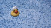 Yellow Toy Duck In Clear Blue Bath