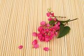 Coral Vine On Wooden Mat