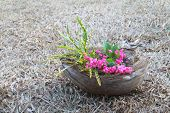 image of coir  - flowers in coir ornament with garden croton