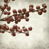 stock photo of winterberry  - textured old paper background with winterberry branches - JPG