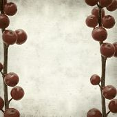 stock photo of winterberry  - textured old paper background with branches of winterberry - JPG
