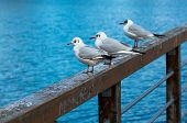 Relaxing Seagulls On Banister