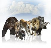 Digital Painting Of Wild Mammals Against A Blue Sky