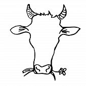 pic of cow head  - Cow Head Hand Drawing - JPG
