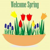 Spring Vector-Spring Flower Pot
