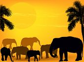 illustration with elephants in sand desert