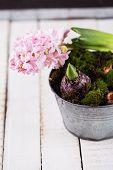 Hyacinth, Moss And Bulb Flowers