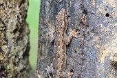 House Small Lizard On The Tree