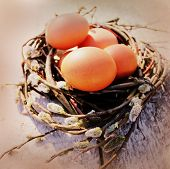 Vintage photo of easter eggs in the nest