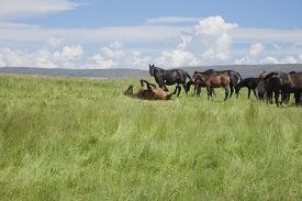foto of wallow  - brown horse wallowing on green prairie next to livestock in Spain Europe - JPG