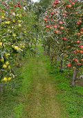 Apple Path