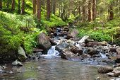 stock photo of coniferous forest  - A mountain river and a coniferous forest - JPG