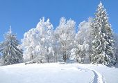pic of bavaria  - Wintertime in Bavarian Forest near Bodenmais and Trees with Hoarfrost - JPG