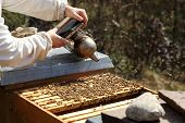 stock photo of bee-hive  - bee keeper with smoker in hand works on bee hive - JPG
