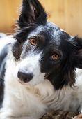 pic of sad dog  - Beautiful white stray dog with sad eyes - JPG