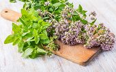 stock photo of oregano  - flowering oregano on a wooden kitchen board - JPG