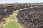 picture of prairie  - A prairie fire burned away most of the plant life leaving only a little grass - JPG
