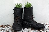 image of army  - A pair of old army boots are outside against a white wall and have been turned into flower pots with lavender growing in them - JPG
