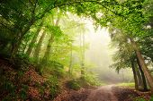 picture of mystical  - Scenic forest landscape with a large natural archway composed of green trees over a path inviting into the misty light - JPG