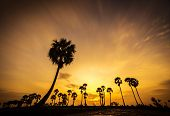picture of tourist-spot  - Colorful sunset or sunrise landscape with silhouettes of palm trees on Chau Doc city - JPG