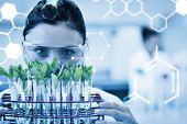 stock photo of scientist  - Science graphic against female scientist with young plants at lab - JPG