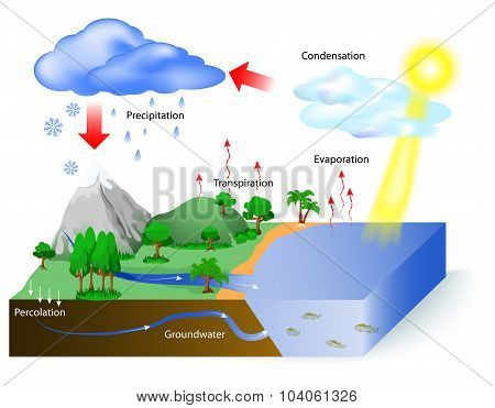 Water Cycle Poster Id 104061326