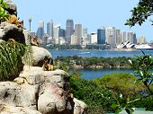 Sydney Harbor from the Zoo