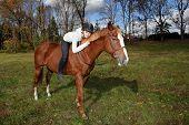 Smiling rider hugging her horse